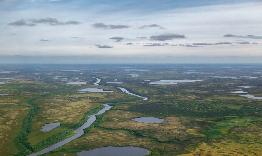 Нейтинское и Арктическое месторождения выставлены на аукцион, но…